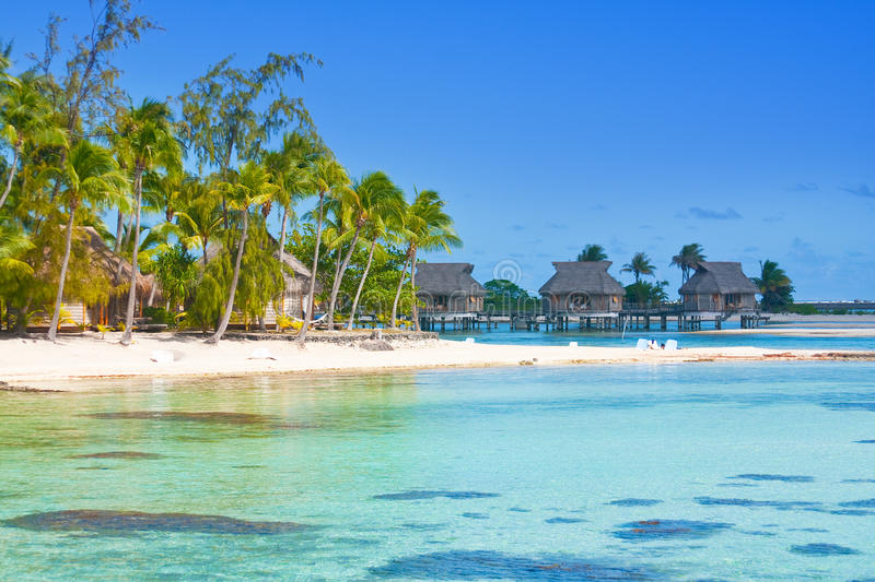 Download Seacoast with palm trees stock photo. Image of maldives - 27558180