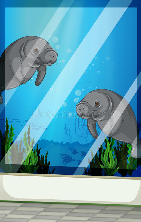 Seacows-Schwimmen unter dem Meer lizenzfreie abbildung