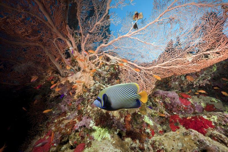 seafan鱼的海洋 免版税库存图片