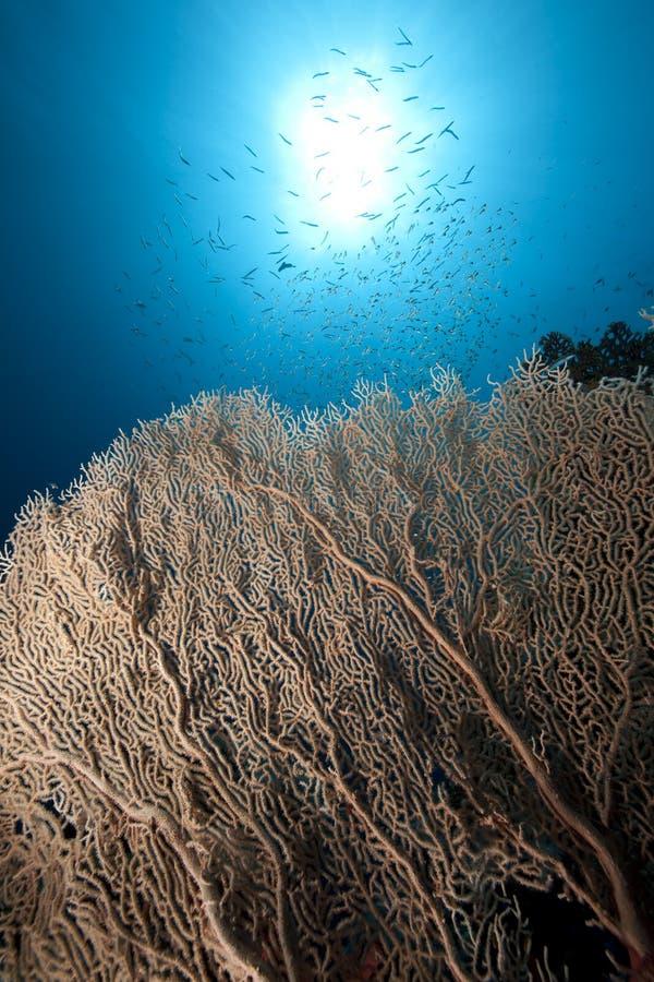 Seafan, océan et poissons photo libre de droits