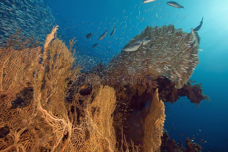Seafan, oceaan en vissen royalty-vrije stock afbeelding