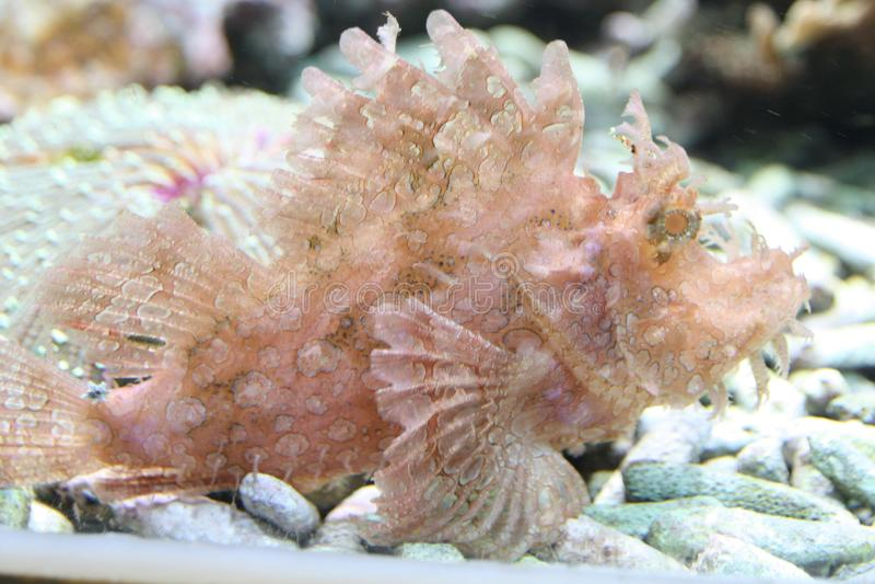 Seafish royaltyfri foto