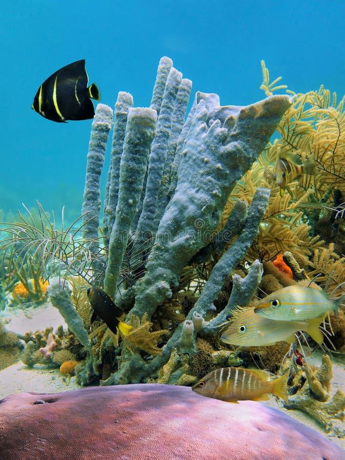 seafloor arkivbild