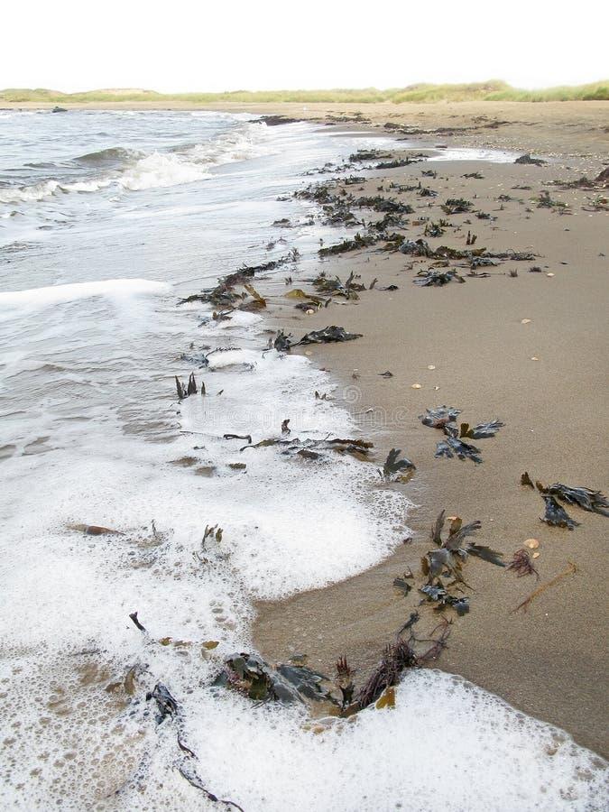 Seafoam gałęzatki plaża obraz stock