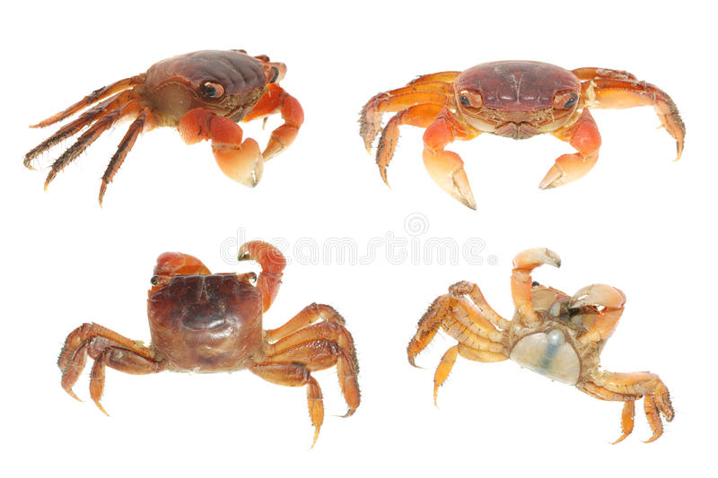Seafood animal crab set collection royalty free stock images