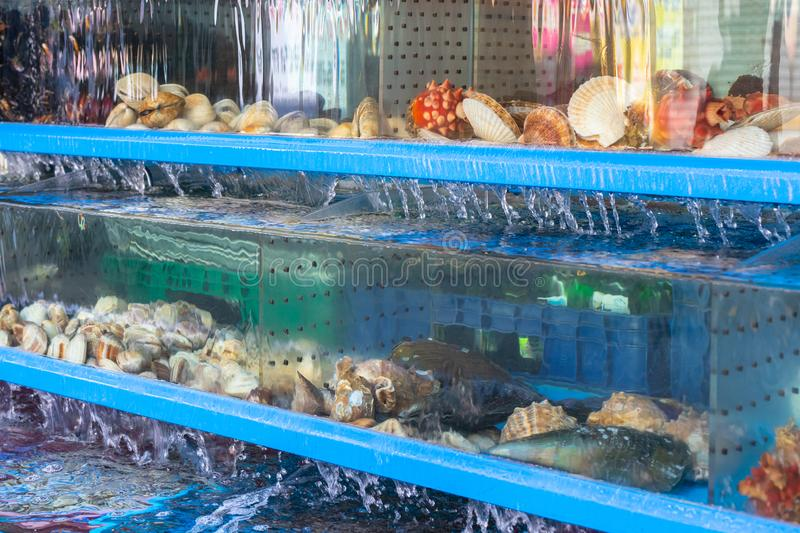 Seafood aquarium in a restaurant for sale. Fresh clams in a seafood restaurant. Shellfishes of different breeds and royalty free stock photo
