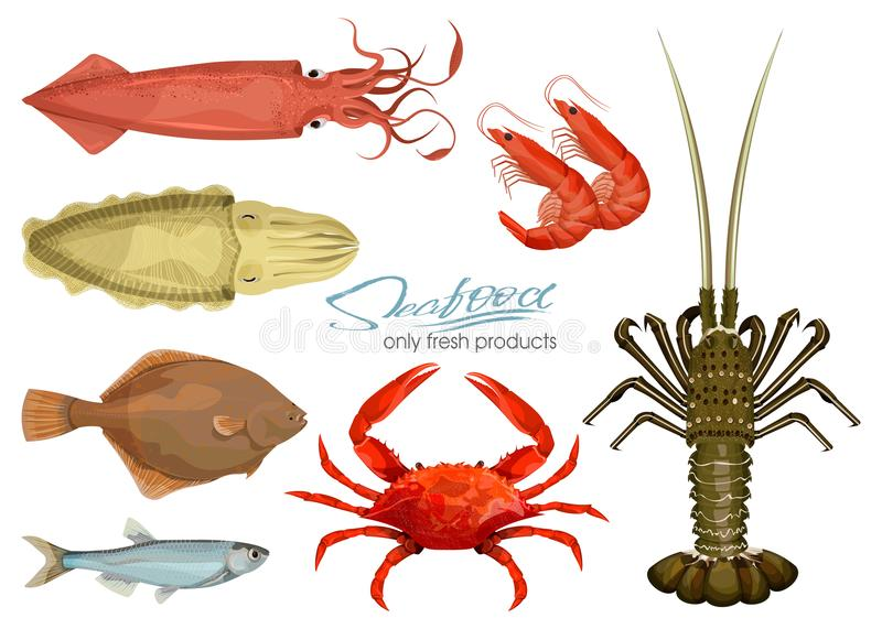 Seafood in cartoon style. Icons. Vector illustrations. Set squid, cuttlefish, crab, shrimp, spiny lobster, flounder fish. Seafood in cartoon style. Vector royalty free illustration