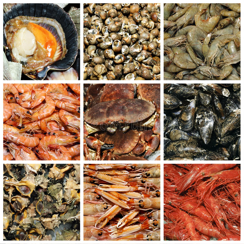Free Seafood Collage Stock Photos - 15840593