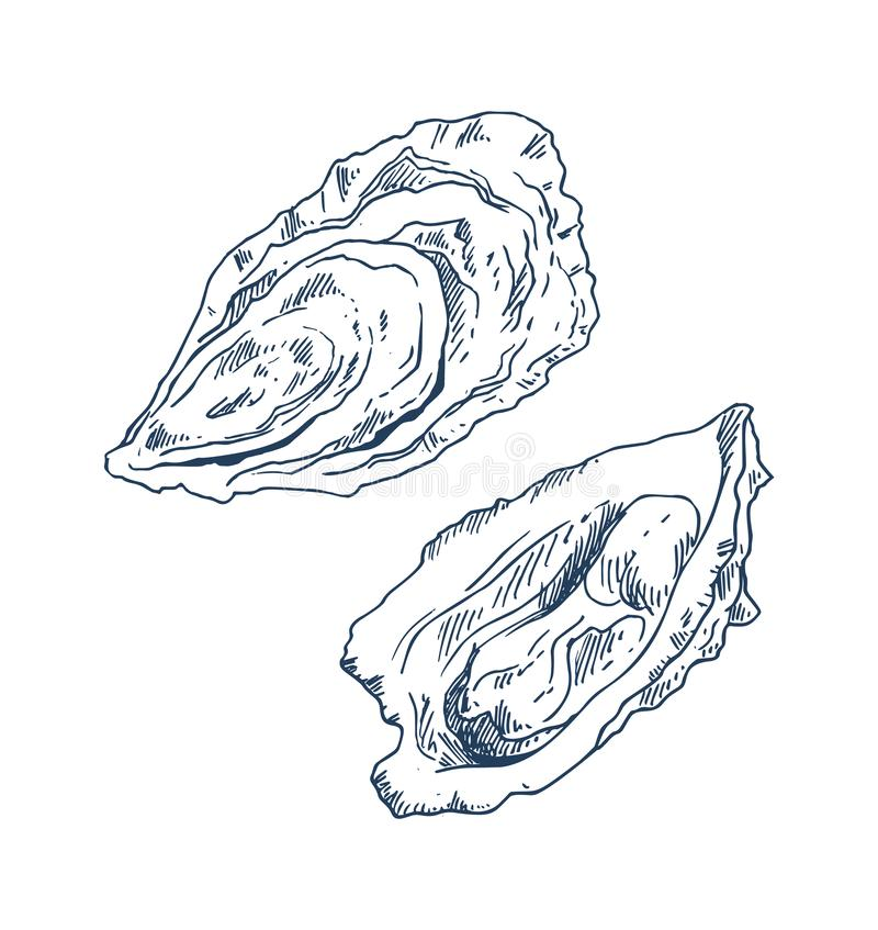 Free Seafood Delicacy Bivalve Oyster Sketch Poster Royalty Free Stock Images - 132001149