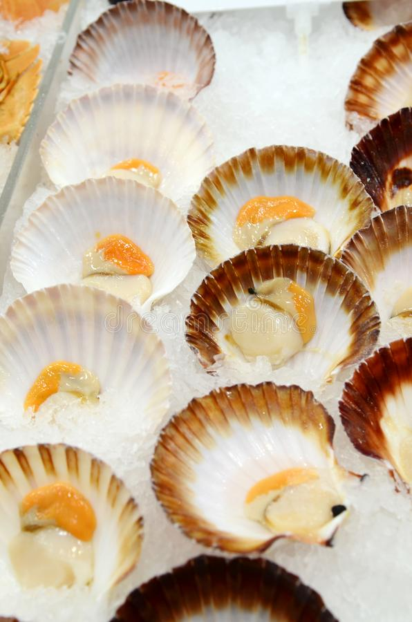 Seafood at fish market. Saucer Scallop Half Shell at fish market in Sydney, New South Wales, Australia royalty free stock photos
