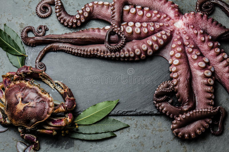 Seafood frame. Food background with seafood raw fresh octopus, crab and laurel, copy space, gray slate background royalty free stock photos
