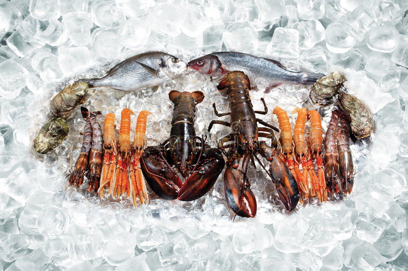 Seafood on ice. Some seafood on ice - crawfish, fish, shellfish royalty free stock photo