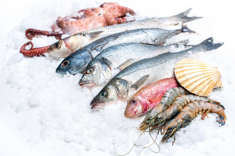 Seafood on ice stock photos