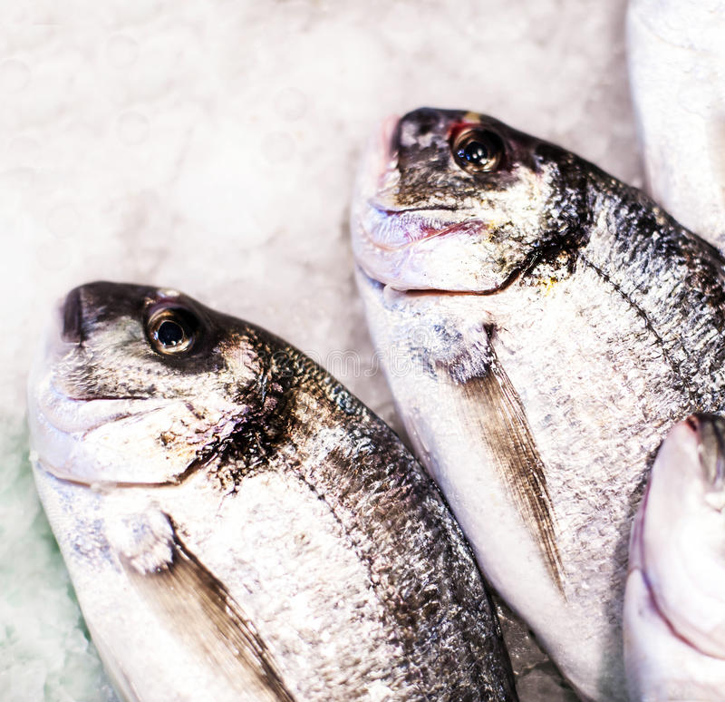 Seafood on ice at the fish market. Dorado fish close up on whi royalty free stock images