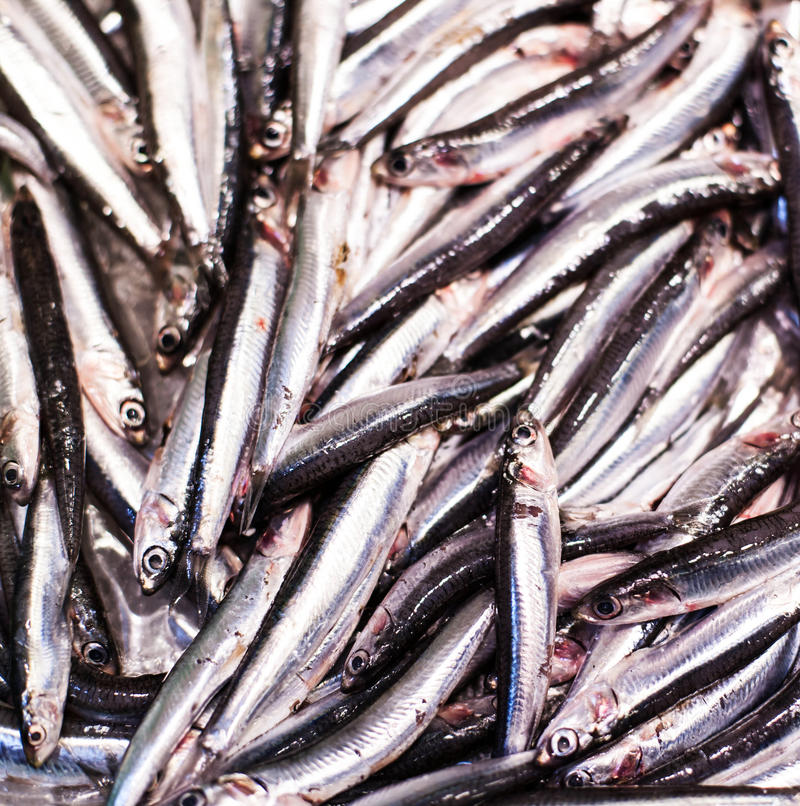 Seafood on ice at the fish market. Smelt fish on white iced ba royalty free stock images