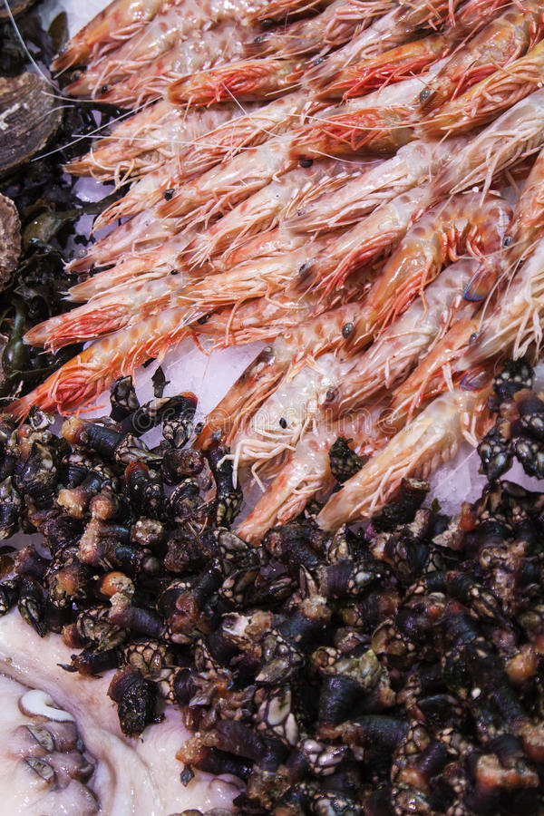 Seafood. Image of seafood at San Miguel Market royalty free stock photo