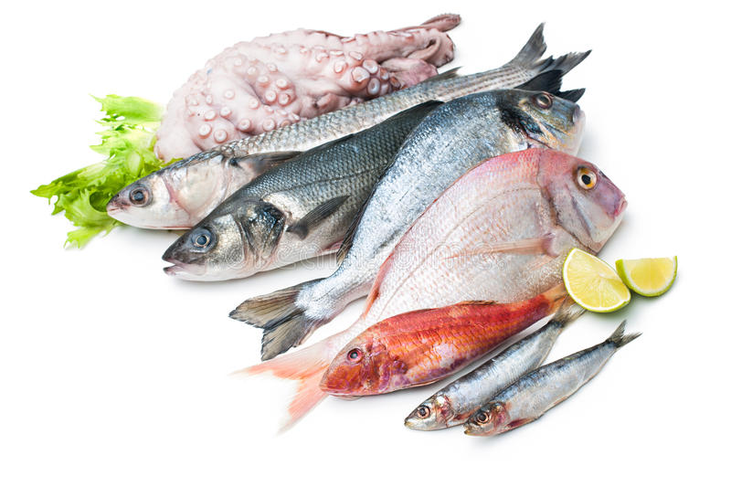 Seafood isolated on white background royalty free stock image