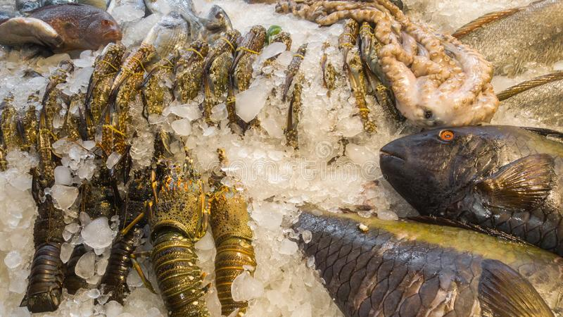 Seafood, lobster, crab, fish, octopus in the ice on fish market.  stock image
