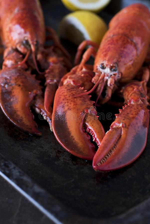 Seafood lobsters with lemon. Fresh beautiful large sea lobsters stock photography