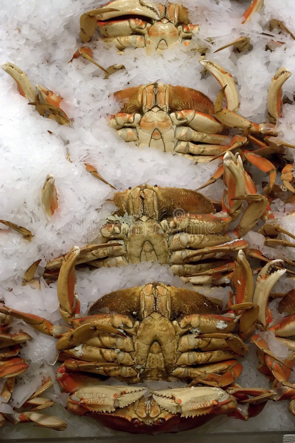 Seafood Market 3. Lobster on display in Seattle's seafood market royalty free stock photo