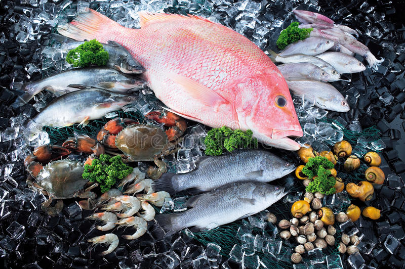 Seafood in market over ice. Great variety of fishes and seafood market ice display royalty free stock images