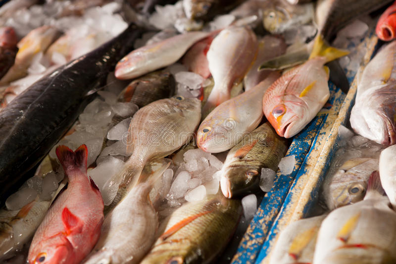 Seafood market. Wide selection of fish on seafood market display in Jimbaran, Bali, Indonesia royalty free stock photo
