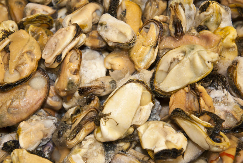 Download Seafood - Mussels stock photo. Image of ocean, open, protein - 46308582