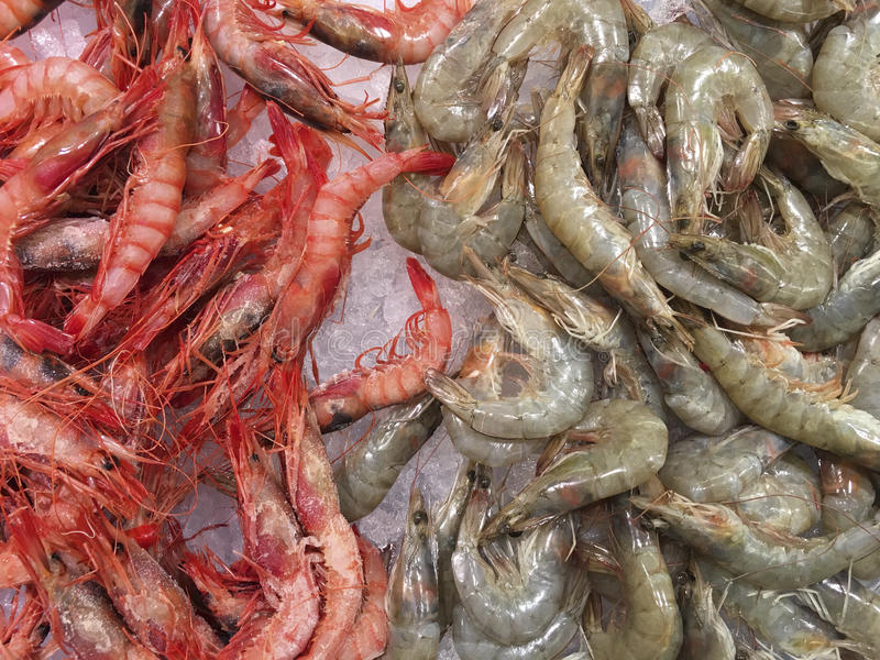 Seafood - Prawns - Shrimps stock image