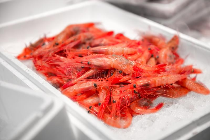 Fresh shrimps or seafood on ice at street market stock photo