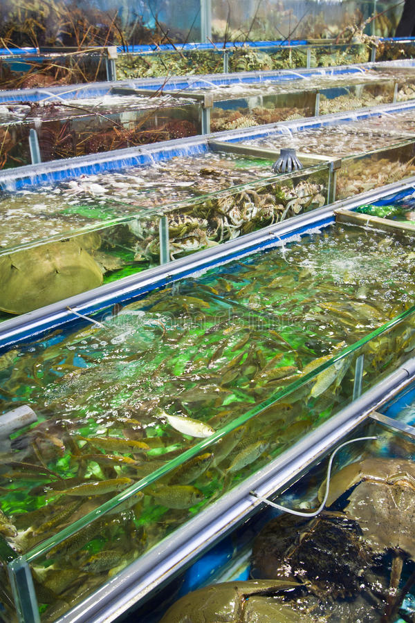 Seafood for sale in Hong Kong royalty free stock photography