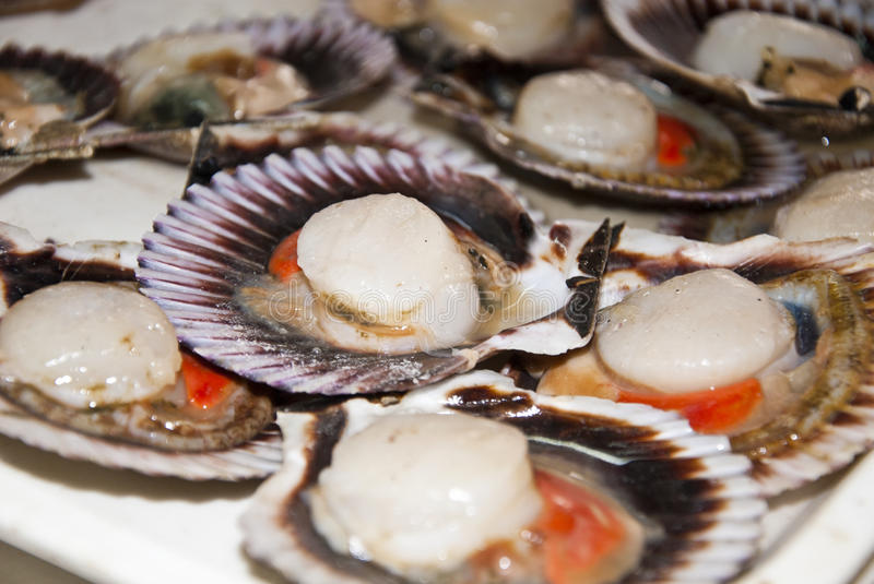 Seafood - Scallops. Two Types Of Meat In One Shell royalty free stock photos
