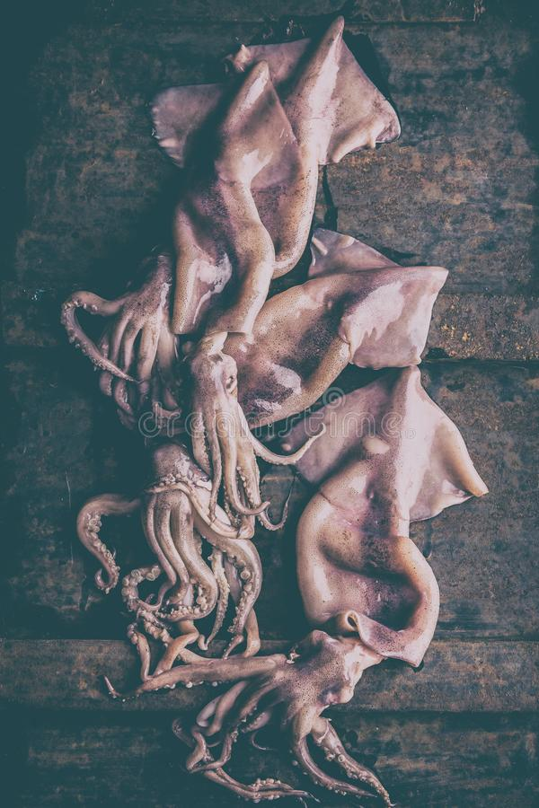 Seafood squid calamary. Fresh raw whole squid with tentacles on rustik background. Top view stock photos
