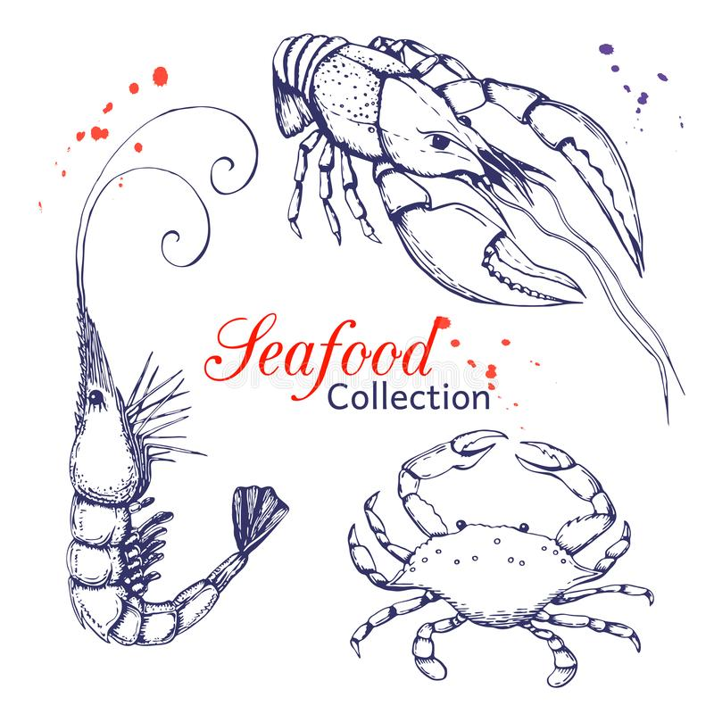 Seafood vector collection. hand drawn engraved seafood element in vintage style with ink splatter isolated on white. realistic. Outline sketched prawn or shrimp vector illustration