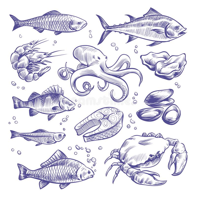 Free Seafoods Hand Drawn. Sea Fishes Oysters Mussels Lobster Squid Octopus Crabs Prawns Salmon Shellfish Natural Sea Food Stock Photography - 140285272