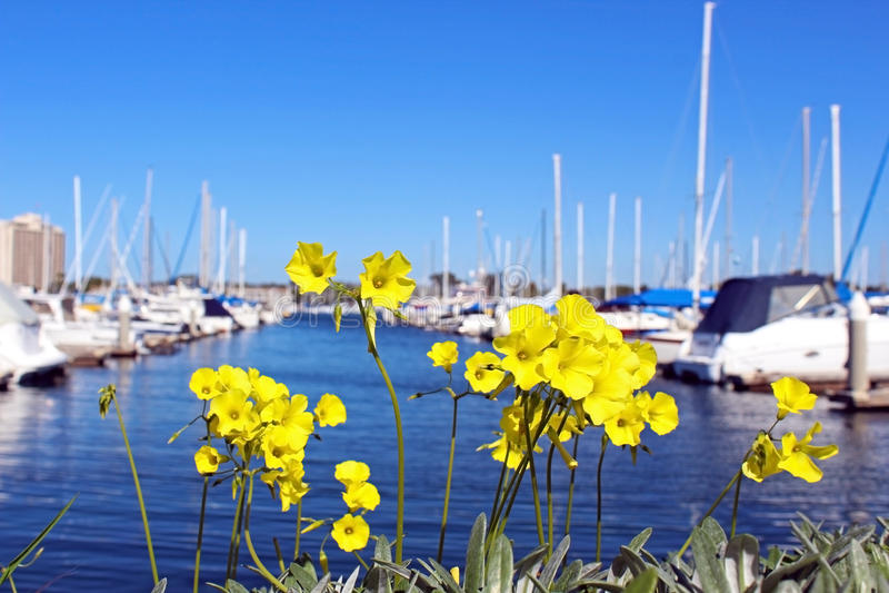 Seaforth Marina Harbor, San Diego, Kalifornien royaltyfria bilder