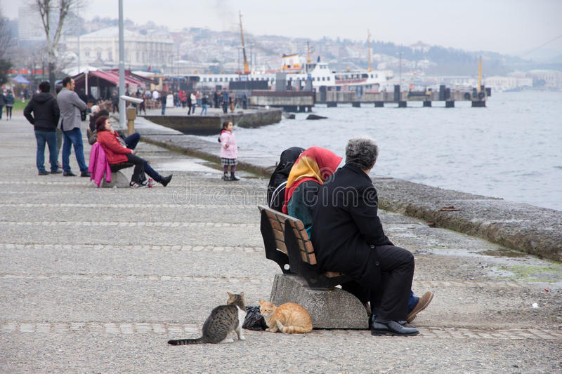 Seafront, quay, Turkey, Istanbul. Sea, cats in Istanbul stock photos