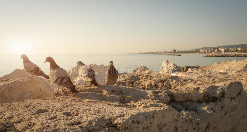 Seafront of San Benedetto del Tronto - Italy. Pigeons on rock by seafront of San Benedetto del Tronto - Italy royalty free stock photo