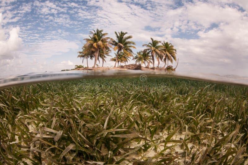 Seagrass и удаленный, тропический остров стоковое изображение rf