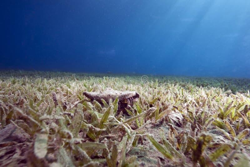 seagrass океана стоковое изображение