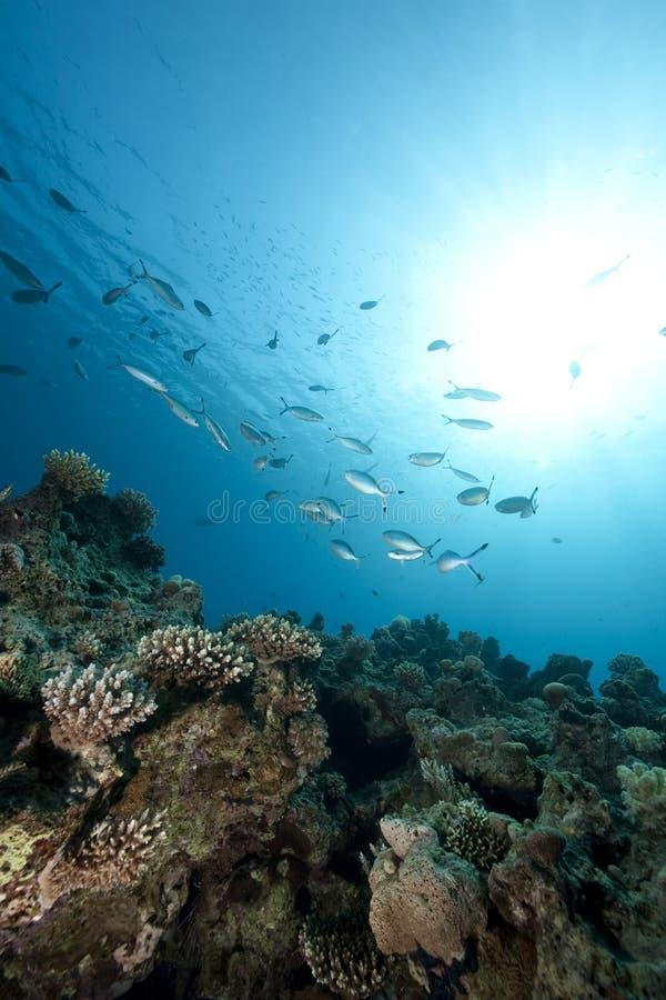 seagrass океана стоковые фотографии rf