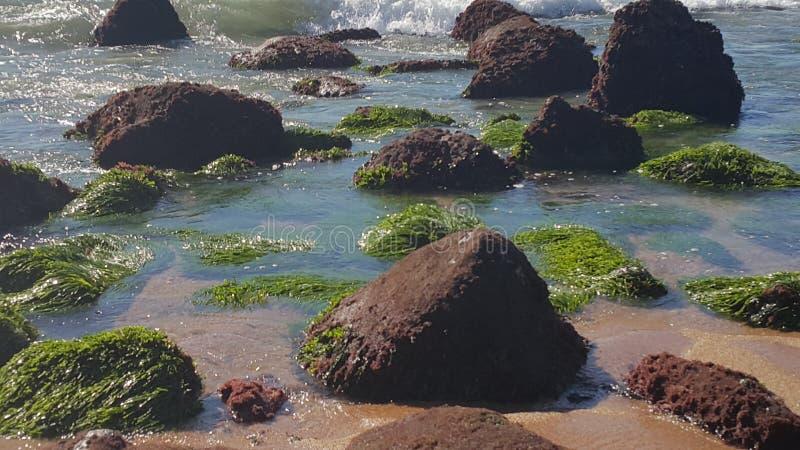 Seagrass en el agua fotos de archivo libres de regalías