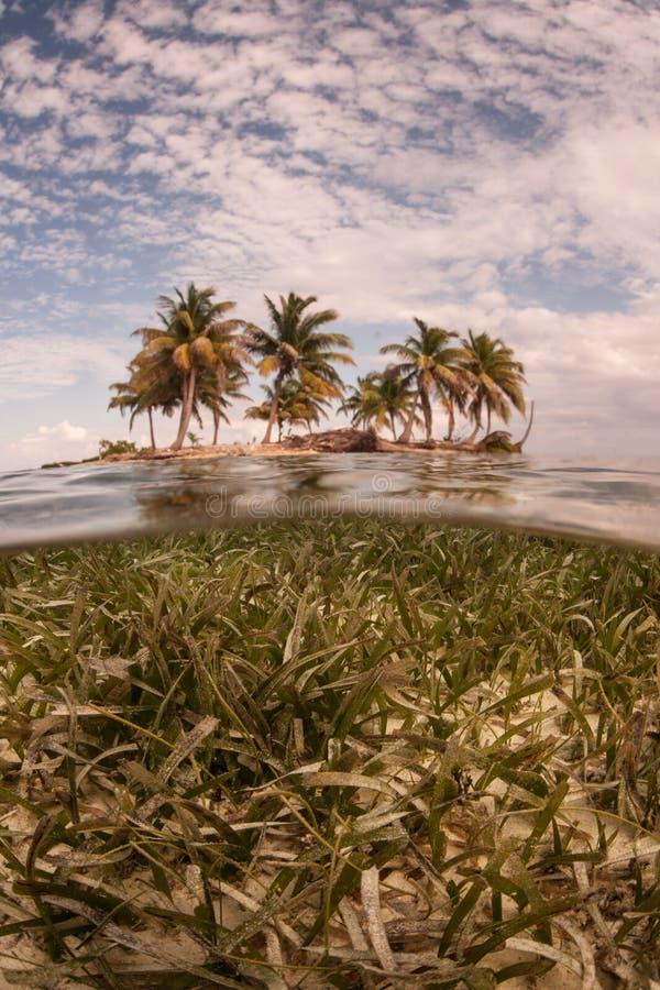 Seagrass en Tropisch Eiland royalty-vrije stock foto