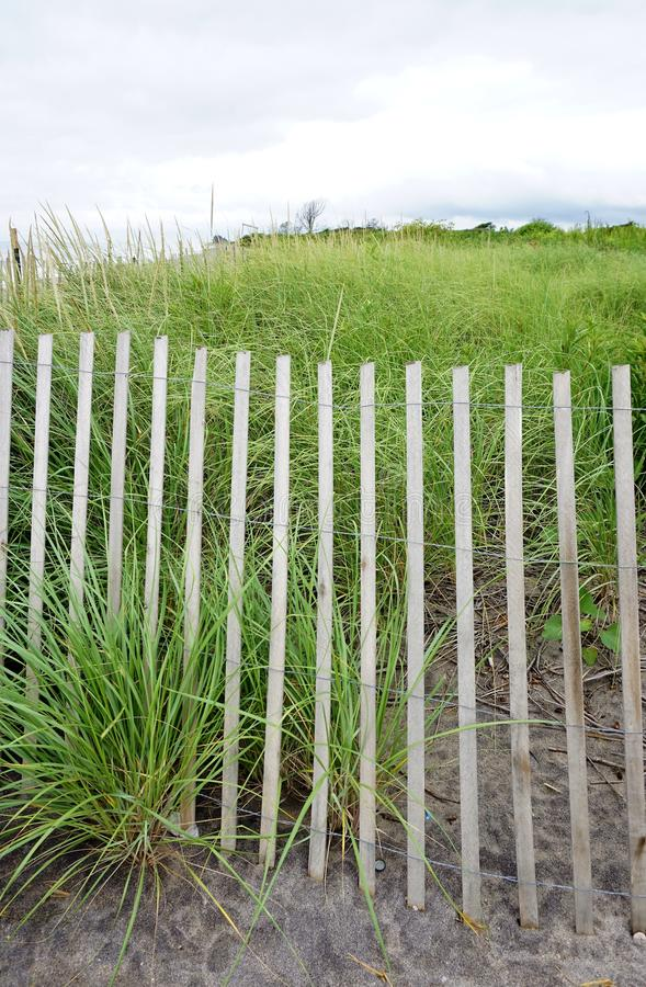 Seagrass. Green sea grass grown on restoration dunes project at a coastal beach on a cloudy overcast day royalty free stock images