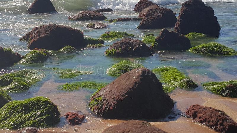 Seagrass in het water royalty-vrije stock foto's