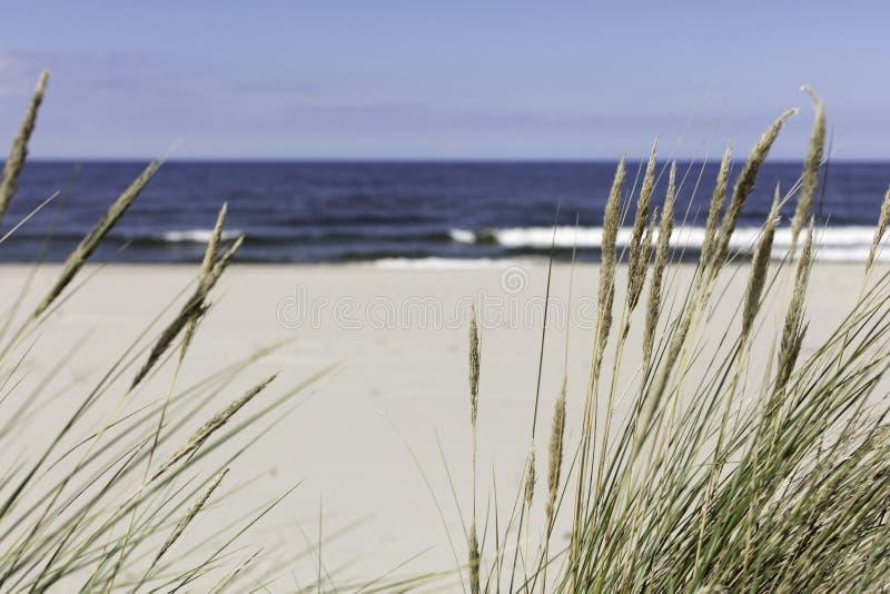 Seagrass sulla spiaggia fotografie stock libere da diritti