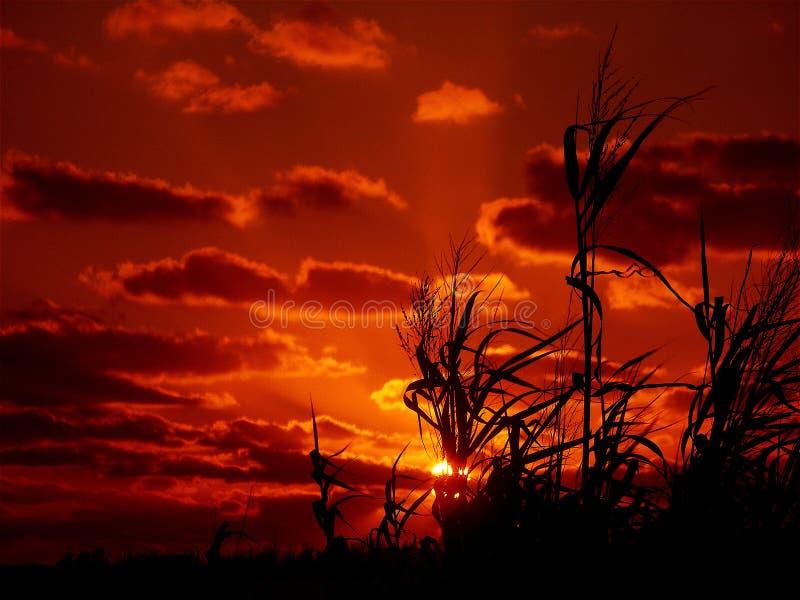 Seagrass y puesta del sol fotografía de archivo
