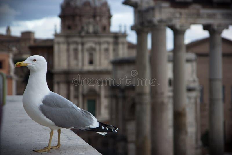Seagul和老城市 图库摄影