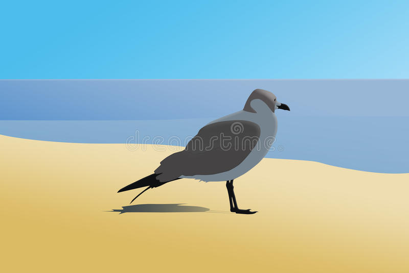 Seagul on the beach stock photography