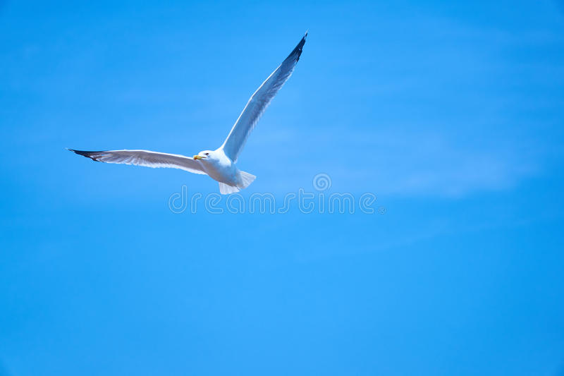 Download Seagul stock image. Image of blue, seaguls, turkey, white - 99107799