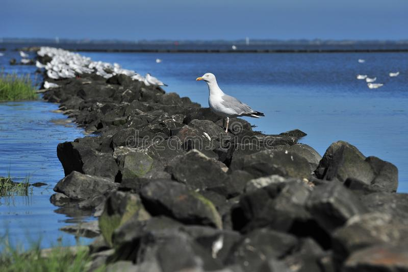 Download Seagul stock image. Image of summer, north, bird, blue - 32720107